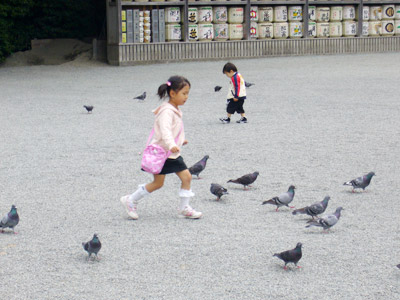 Little girl chasing pigeons