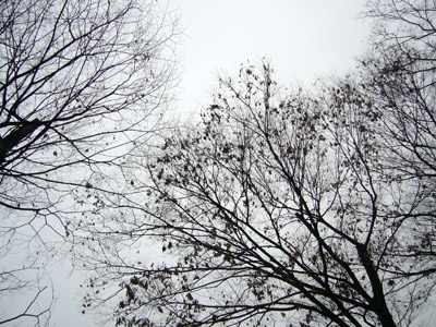 Leaves of trees against sky